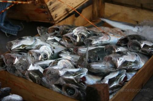 Fish ready for sale, Favignana Sicily