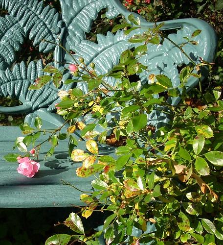 Rosen und Gartenbank