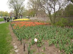 Canadian Tulip Festival - Commissioners Park 11