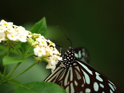 butterfly_20071013_02.jpg