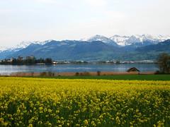 Schweizer Ansichten im Mai 04
