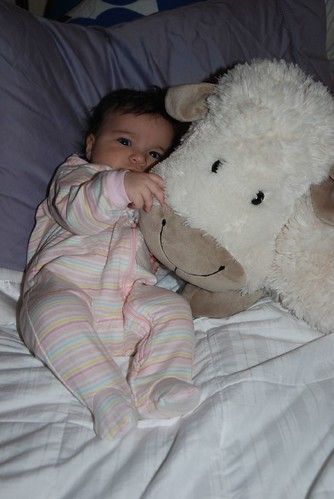 Three Month Birthday Sheep Photo