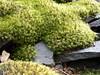 Sinking Creek Mountain - Rock Beats Scissors, Moss Beats Rock
