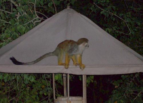 131/365 monkey
