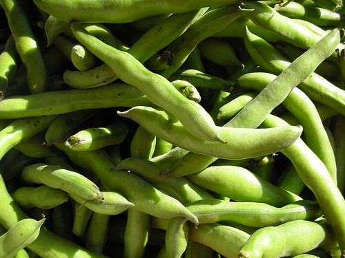 Fava's are back!