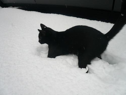Oreo's first snow