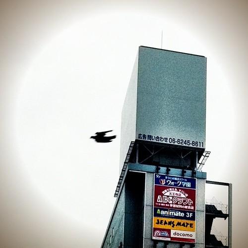 鳩? #bird