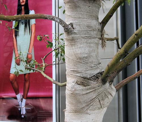 Ejemplo de árbol friolero.