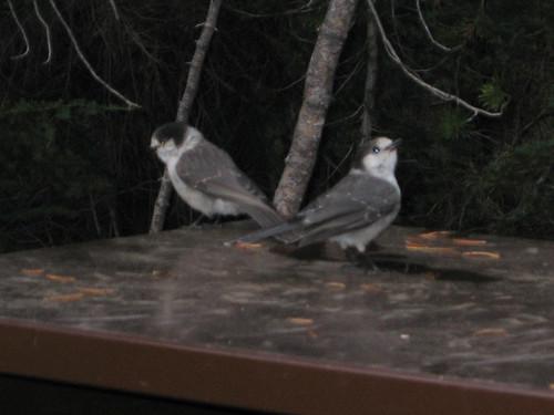 Day 04 - Morning Birds