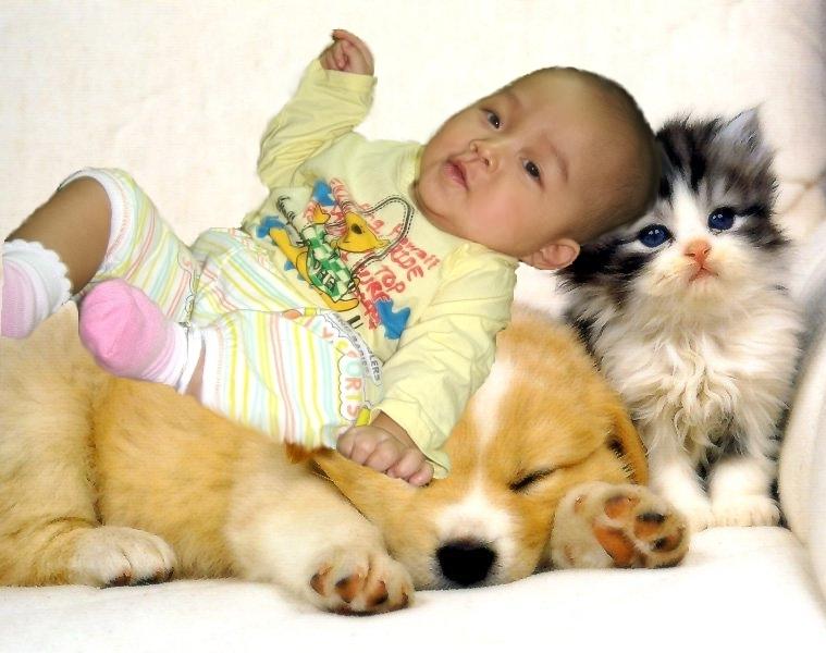 Cun-Cat-Dog