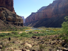 Grand Canyon - Nankoweap Trail - Approaching t...