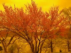 blublocker tree