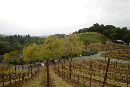 Benziger Winery by cubechick
