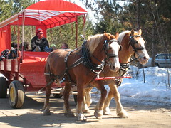 want to hop in the wagon ride?
