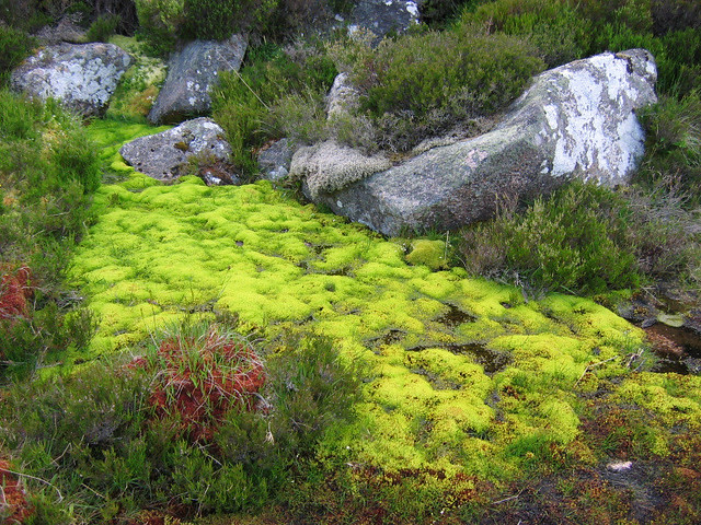 A mossy 'flush'