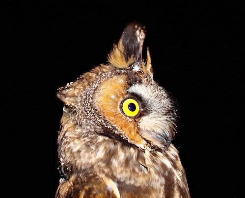Owl Mug shot!