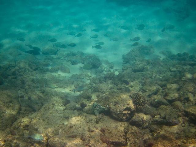 Napili Fish and Coral