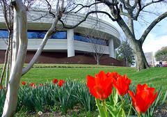 Leu Center for the Visual Arts - Spring 2008 8...