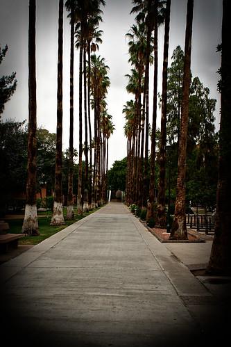 palmwalkmall