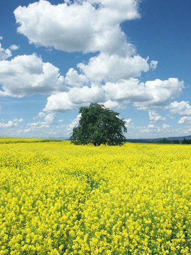 The Parables of the Mustard Seed and the Yeast, mustard tree