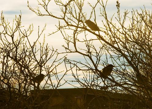 little birds in bushes