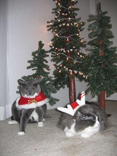 Christmas card pose 2