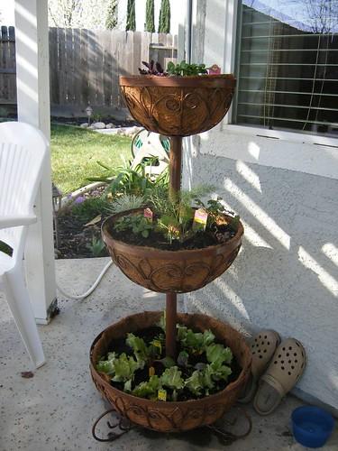 Herb & Salad Garden