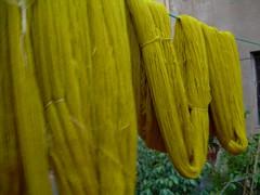 Amarillo lima