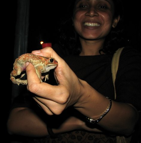 toad in pallavi's hand banashankari suchitra film society 220308