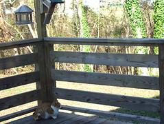 orangecat_deck_mar08
