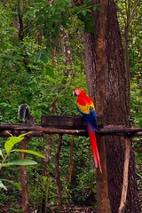 Copan Ruinas. Macaw and Squirrel