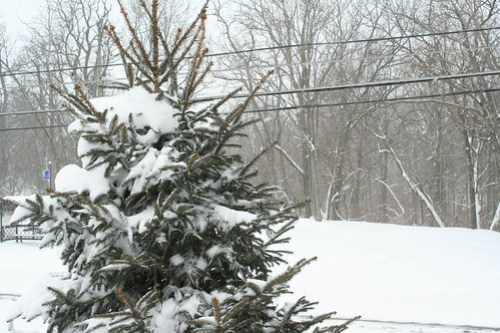 The Blizzard of 2008
