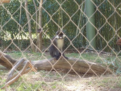Cute faced monkey