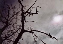 gloomy winter day