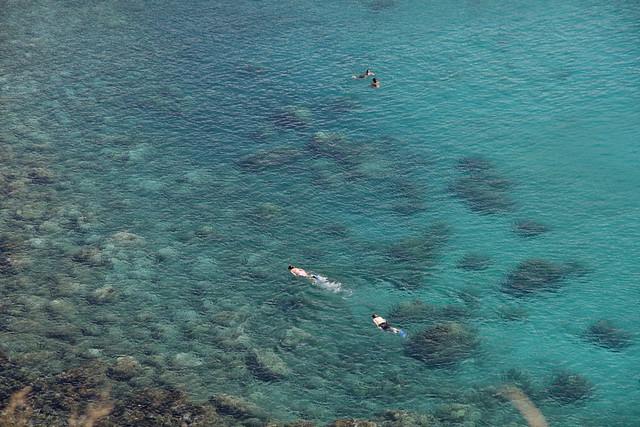 Honolua Snorkeling