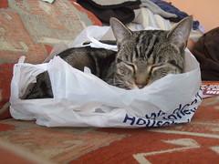 Cat sleeping in shopping bag