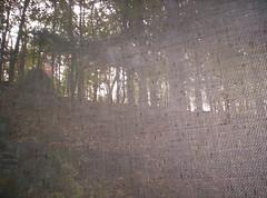 Turkeys obscured by screen