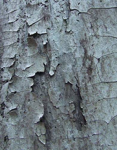 bark study 1