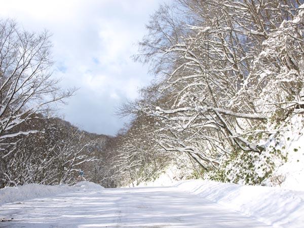 2008年1月 十和田 1