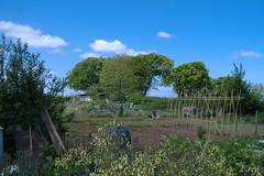 080519-allotment487