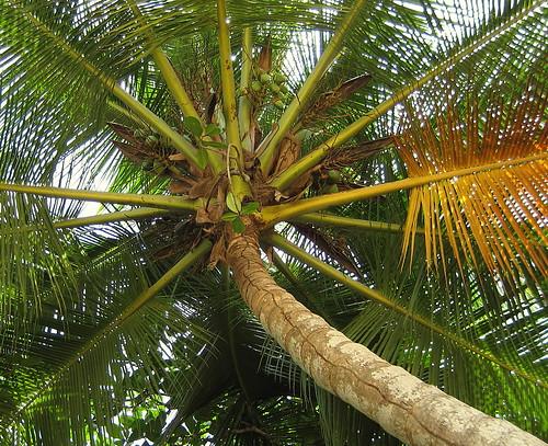 Tobago 2007