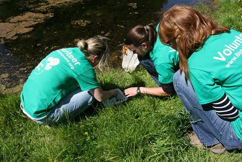 Bonnie, Becky and Lauren identifying damselfly larvae