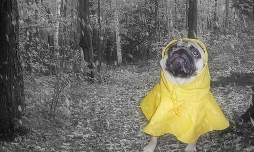 Frank sárga esőköpenyben