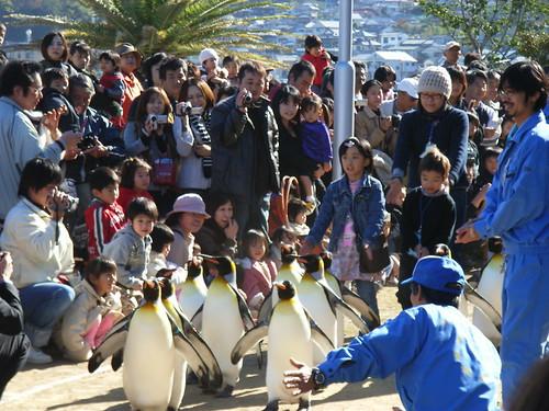 國王企鵝遊行