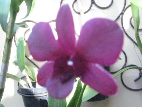 Nuevas Prendas de Plantas Exóticas Dominicanas