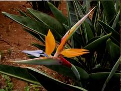 Bilder Madeira