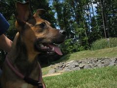 Baxter's profile