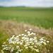 Countryside-20110613-057