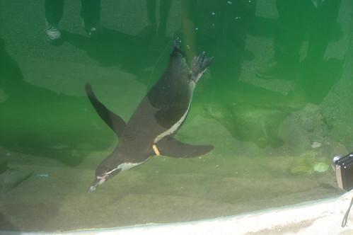 Penguin 4
