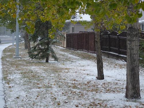 Foliage and Snow